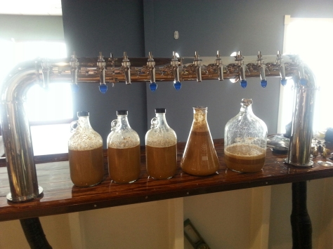 Collecting yeast from a prior batch.